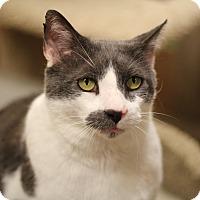 Adopt A Pet :: Wally - Richmond, VA