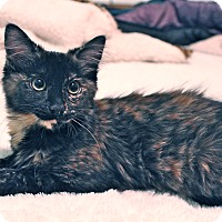 Adopt A Pet :: Candie - Orange, CA