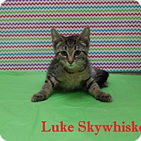 Adopt A Pet :: Luke Skywhiskers - Bucyrus, OH