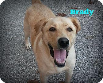Labrador Retriever Mix Dog for adoption in Muskegon, Michigan - Brady
