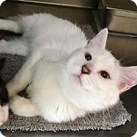 Adopt A Pet :: Whisper - Oakdale, CA