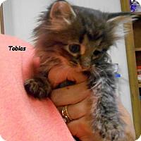 Adopt A Pet :: Tobias - Oskaloosa, IA