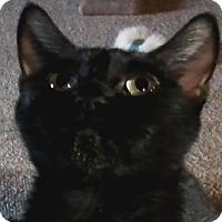 Adopt A Pet :: Felicia - Lancaster, PA