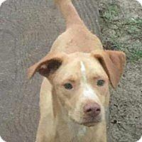 Adopt A Pet :: Bane - Crestview, FL