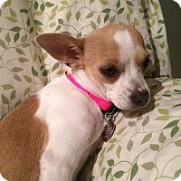 Adopt A Pet :: Ivy - Knoxville, TN