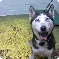 Adopt A Pet :: FRISKY - Atlanta, GA