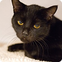Adopt A Pet :: Rocky Road - Grayslake, IL
