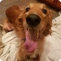 Adopt A Pet :: Cliff - Denver, CO