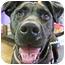 Photo 4 - Labrador Retriever Mix Dog for adoption in Detroit, Michigan - Luna