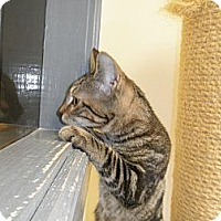 Adopt A Pet :: Sal - In Foster Care - Milwaukee, WI