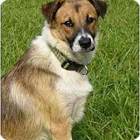 Adopt A Pet :: Josey - Mocksville, NC