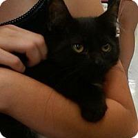 Adopt A Pet :: Fonzi - Sterling Hgts, MI
