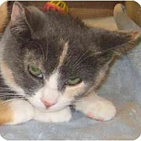 Adopt A Pet :: Kayla - Jenkintown, PA