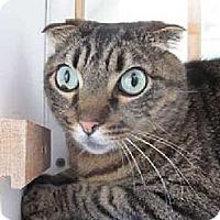 Adopt A Pet :: MacIntyre - Davis, CA