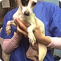 Adopt A Pet :: Bethany - New York, NY