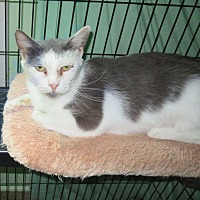 Adopt A Pet :: Traci Mae - Grand Chain, IL