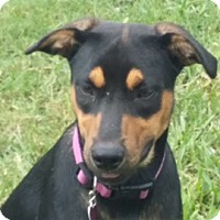 Adopt A Pet :: Gigi - Homestead, FL