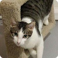 Adopt A Pet :: Basil - Chandler, AZ