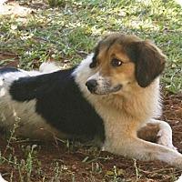 Adopt A Pet :: Kiley - Greenville, SC