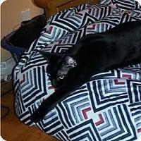 Adopt A Pet :: Bijou - Cerritos, CA