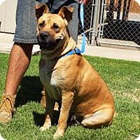 Adopt A Pet :: Penny - Lathrop, CA