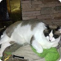 Adopt A Pet :: misaki - Laguna Woods, CA