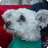 Adopt A Pet :: Harry - San Marcos, CA