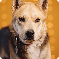Adopt A Pet :: Hatchie - Portland, OR