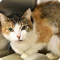 Adopt A Pet :: MESHE - Philadelphia, PA