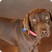 Adopt A Pet :: Von - San Antonio, TX