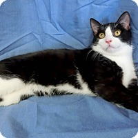 Adopt A Pet :: HUTCH - New Cumberland, WV