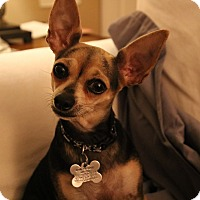 Adopt A Pet :: Lilly - San Diego, CA