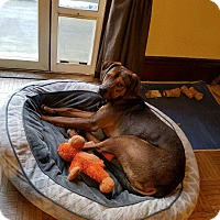 Adopt A Pet :: Wriggley - Boston, MA
