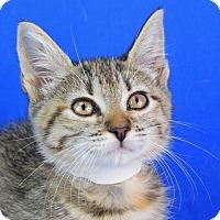 Adopt A Pet :: Claudia - Carencro, LA