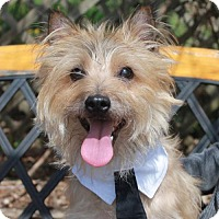 Adopt A Pet :: Scottie-PENDING - Garfield Heights, OH