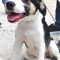 Adopt A Pet :: Baby Sunburst - Rockville, MD