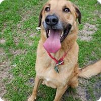 Adopt A Pet :: Enzo - Boston, MA