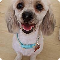 Adopt A Pet :: Chula - Encino, CA