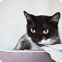 Adopt A Pet :: Ava - Parma, OH