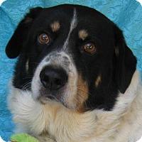 Adopt A Pet :: Buddy Kramer - Cuba, NY
