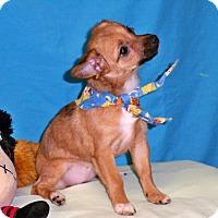 Adopt A Pet :: CICI - Poteau, OK