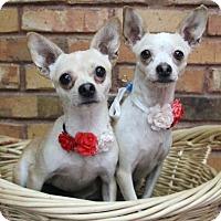 Adopt A Pet :: Gina and Tina - Benbrook, TX