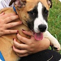 Adopt A Pet :: Joey - Oswego, IL