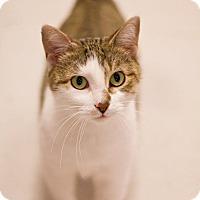 Adopt A Pet :: Meri - Grayslake, IL