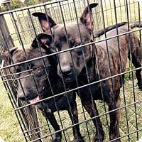 Adopt A Pet :: Hansel & Gretel - Portland, IN