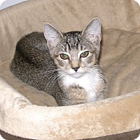 Adopt A Pet :: Rebel Rebel - Covington, KY