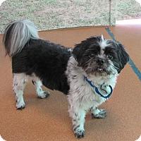 Adopt A Pet :: Oreo - Norwalk, CT
