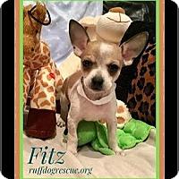 Adopt A Pet :: FIZZ - Milton, GA