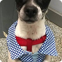 Adopt A Pet :: Wrinkles - Middletown, OH