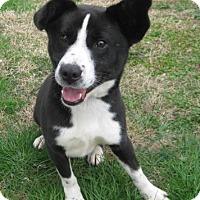 Adopt A Pet :: Rosco - Huntsville, AL